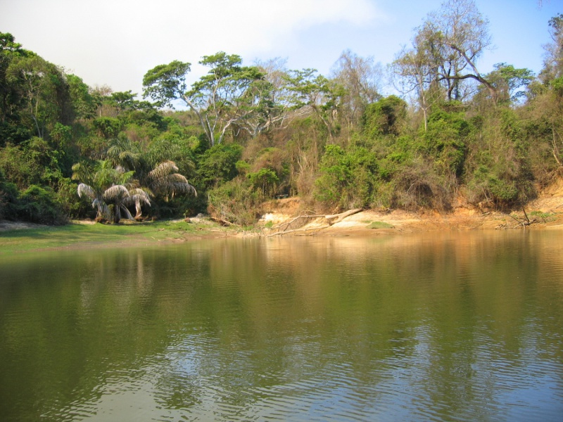 File:Ankarafantsika National Park 033.jpg